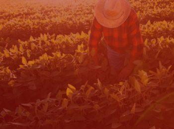tempo rural na aposentadoria. Imagem com fundo vermelho, simbolizando a aposentadoria por tempo rural. Foto com agricultor colhendo as plantas, folhas verdes. Trabalhador vestindo chapéu de palha, camisa vermelha quadriculada, e calça jeans.