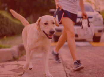notícia: Condomínio não pode multar moradora por transportar cachorro na coleira em áreas comuns . #pratodosverem: na foto, uma mulher caminha com seu cachorro, que esta na coleira. Cores na foto: amarelo, azul, rosa, preto, prata e verde.