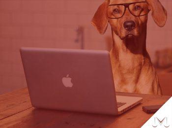 #pratodosverem: artigo: Animais podem figurar como autores em ações judiciais quando defendem seus próprios interesses? Descrição da imagem: um cachorro em frente de um computador. Cores na foto: prata, cinza, vermelho, caramelo, preto e branco.